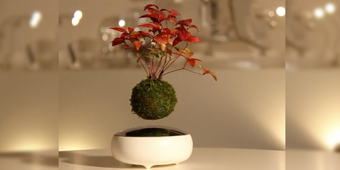 Air Floating Bonsai