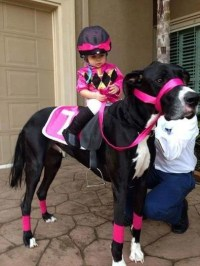 Horse Dog And Its Tiny Jockey - Best Halloween Pet ...