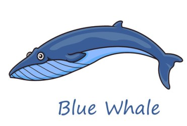 Funny cute cartoon blue whale isolated on white background for nautical wildlife and ecology design: Royalty free vector graphics