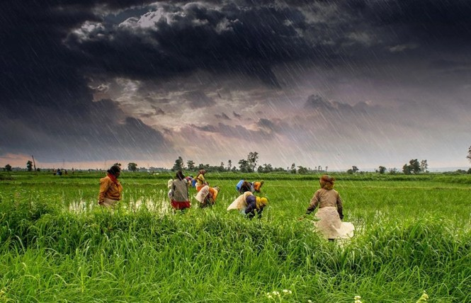 Cabinet Approves Amendments In Essential Commodities Act, To Lift ...