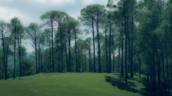 Become one with nature at Ranikhet.