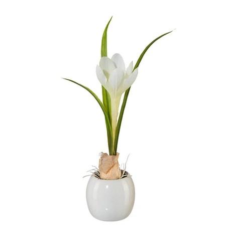 Krokus und Iris mit Zwiebel im Keramiktopf wei und lila ca 20 cm 4erSet online kaufen