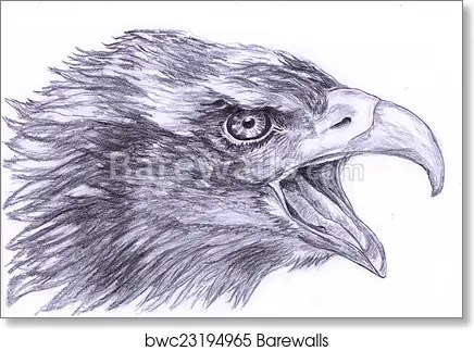 Illustration Sketch The Eagle Head Art Print Barewalls Posters Prints Bwc23194965