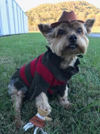 Freddy Krueger Dog Costume   BaxterBoo