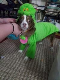 Ghostbusters Slimer Dog Costume with Same Day Shipping ...