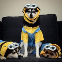Minion Dog Costume with Same Day Shipping | BaxterBoo