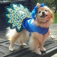 Peacock Dog Costume with Same Day Shipping | BaxterBoo
