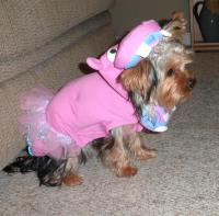 Pink Hippo Dog Costume with Same Day Shipping | BaxterBoo