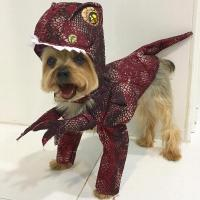 Raptor Dog Costume with Same Day Shipping