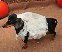 Rubie's Bride Dog Costume | BaxterBoo