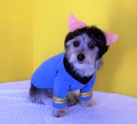 Star Trek Dog Costume - Spock with Same Day Shipping ...