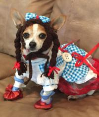 Wizard of Oz Dorothy Dog Halloween Costume | BaxterBoo