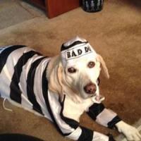 Prison Dog Halloween Costume