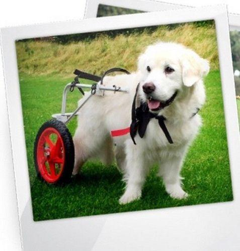wheelchair dog roman chair exercise equipment best friend mobility baxterboo