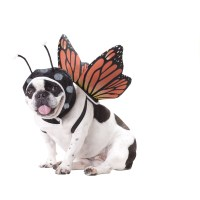Butterfly Dog Costume with Same Day Shipping | BaxterBoo