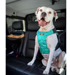 clickit terrain car safety dog harness by sleepypod robin egg blue [ 1600 x 1600 Pixel ]