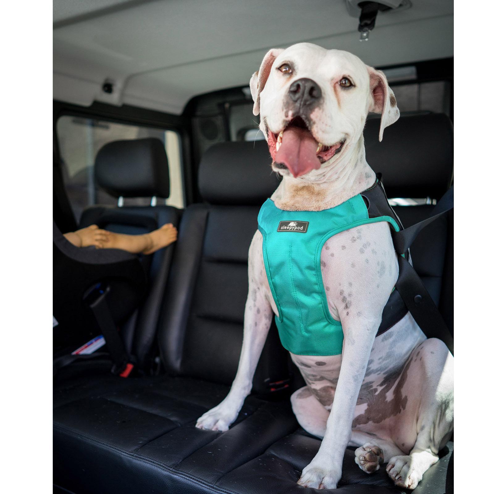 hight resolution of clickit terrain car safety dog harness by sleepypod robin egg blue