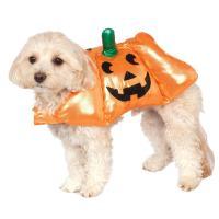 Pup-O-Lantern Halloween Dog Costume | BaxterBoo