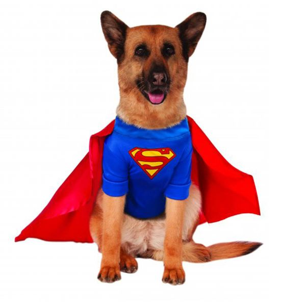 Superman Dog Halloween Costume - Big Edit. Baxterboo