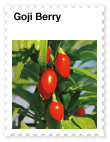 Goji Berry – Powerful Antioxidant