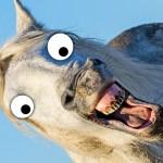 Horse Jokes Funny Horse Jokes Beano Com