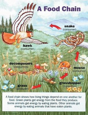 savanna animal food chain diagram 2000 ford focus parts jyydek