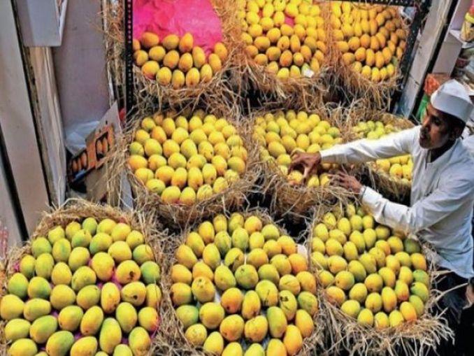 कोंकण में हर साल 2.75 लाख टन अल्फांसो होता है, इस बार भाव भी कम। - Dainik Bhaskar