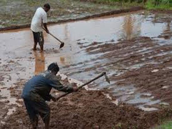 बरसात के बाद बोनी के लिए खेत तैयार करते किसान।