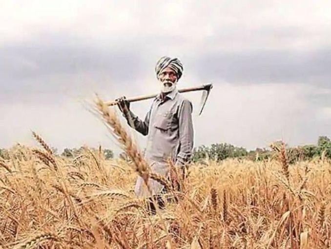 विशेषज्ञों का कहना है कि किसानों की इनपुट लागत बढ़ती जा रही है, जबकि जीवनयापन महंगा होता जा रहा है। (फाइल फोटो) - Dainik Bhaskar