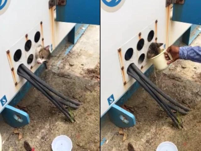 बिल्ली की गर्दन जेनरेटर वायर सप्लाई होल में फंस गई।  उसे बाहर निकालने का प्रयास किया गया, इस दौरान लोगों ने उसे पानी पिलाया।