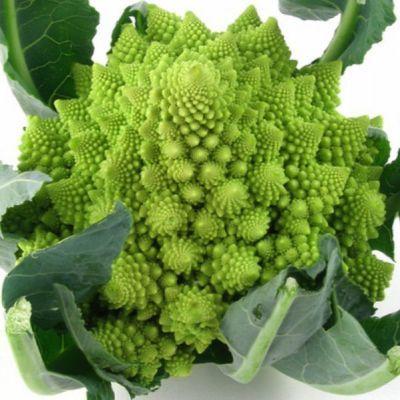 https://i0.wp.com/images.bidorbuy.co.za/user_images/651/390651_110221123601_Romanesco_Broccoli2.jpg