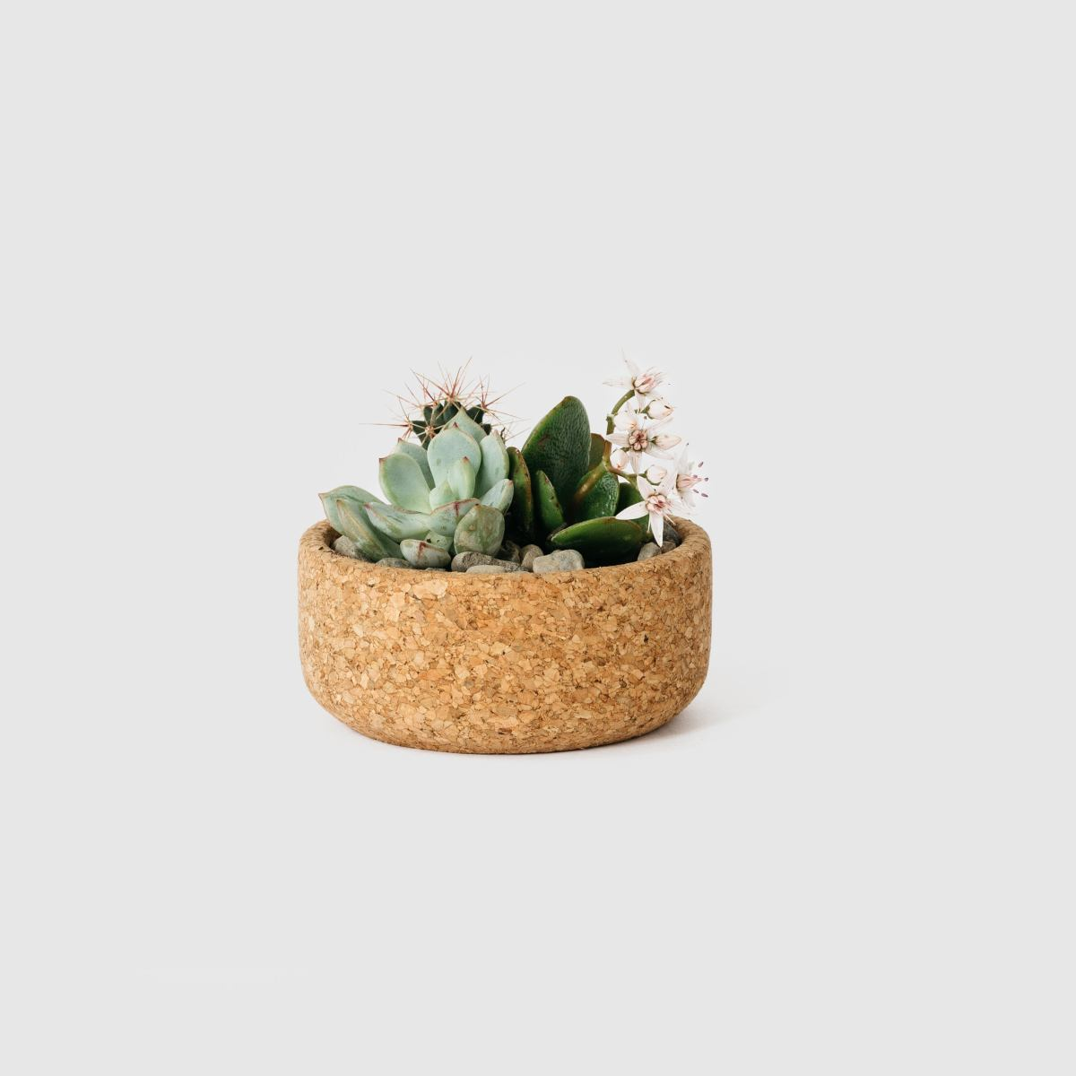 Melanie Abrantes  Mini Cork Planter