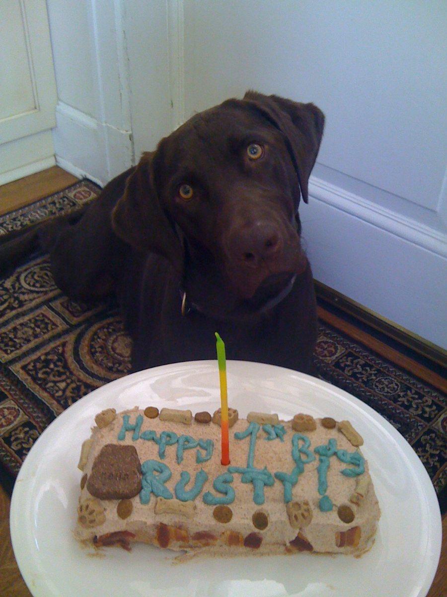 Doggie Birthday Cake Fomanda Gasa