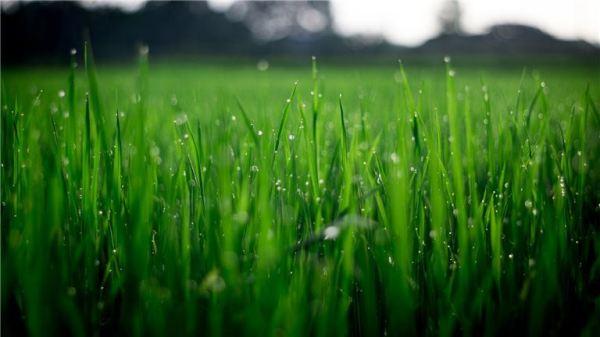 successful lawn landscape & irrigation
