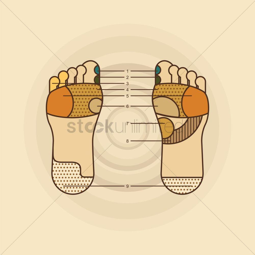 medium resolution of foot massage diagram vector graphic