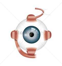 human eye anatomy vector graphic [ 1300 x 1300 Pixel ]