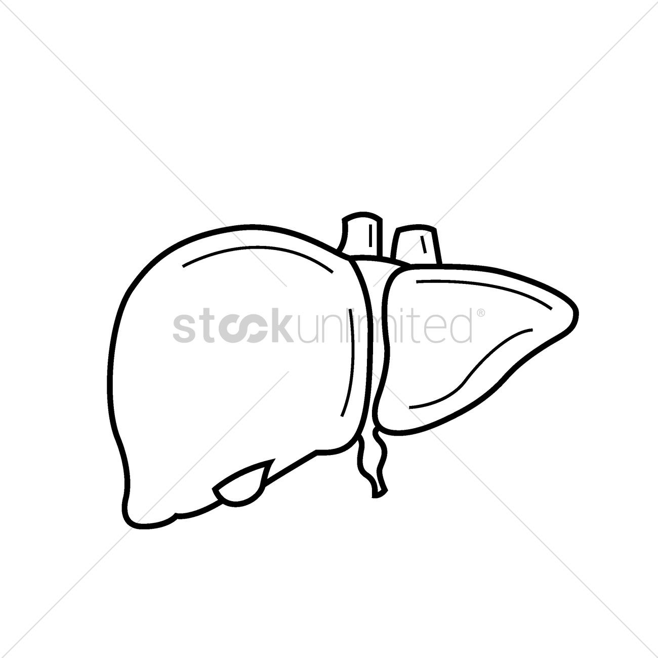 The Human Body Diagram Of Diaphragm