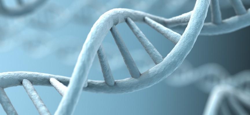 Risultati immagini per cellule staminali embrionali pier mario biava