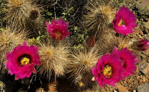 The cactus were in full bloom while we were there.