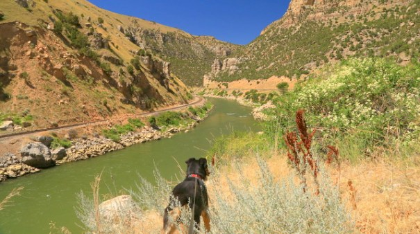 Cody and I walked along the beautiful Wind River Canyon. The water was an amazing green color and it's a beautiful spot. It's a very popular fishing spot so there are several places where you can get down to the river. This is looking north.
