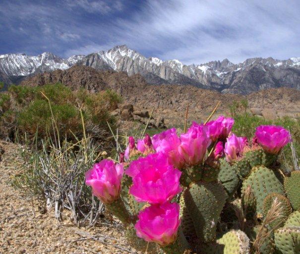 a-hills-cactus-1