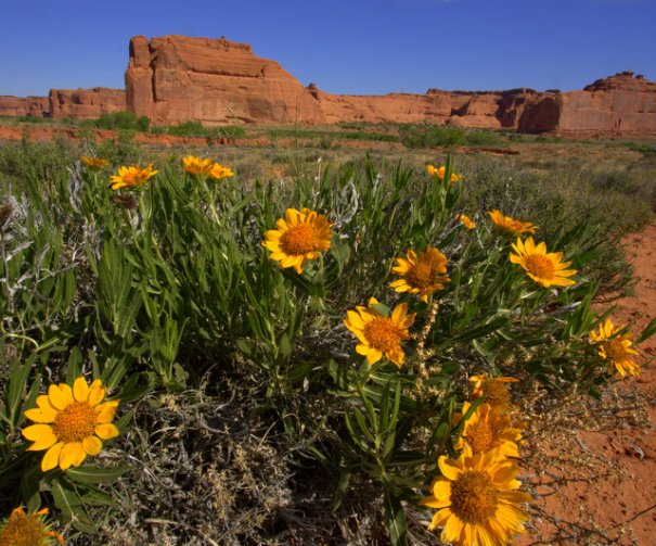 arches-wall-flowers