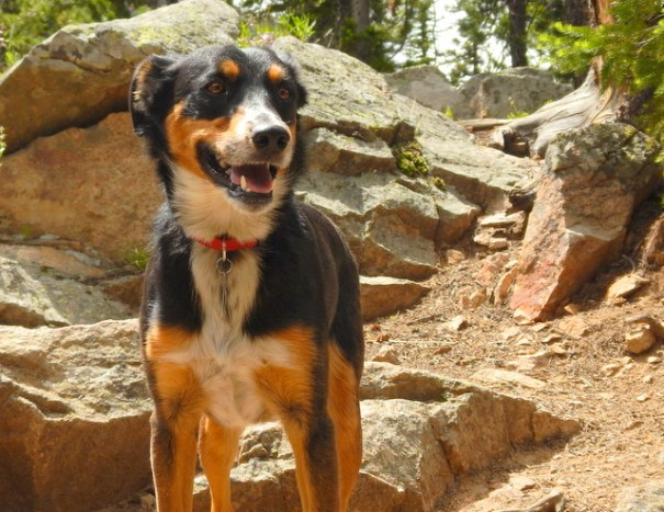 """Cody is totally happy in the wild, it's obvious to me from his behavior it's more than worth the risk to him and keeping him """"safe"""" would only bring him misery."""