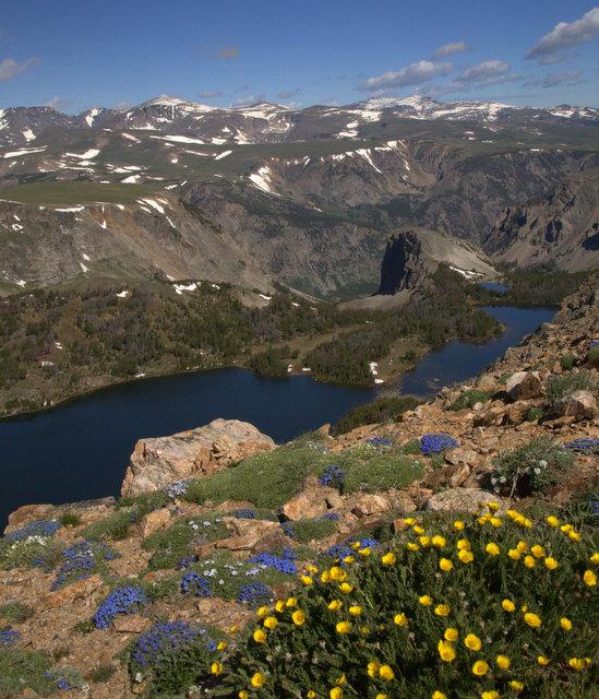 bear-lakes-flowers-great