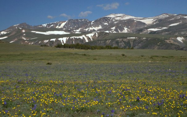 The magic of the Beartooth is in the variety. on top it's broad tundra-like plateau filled with fields of wildflowers.