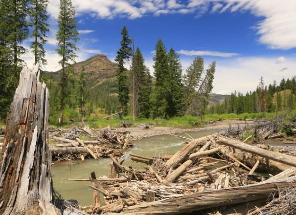 bil-lodge-river-timber