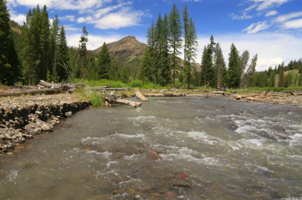 I stopped along the way and walked up this creek that flowed into the Shoshone and loved it;s beauty.