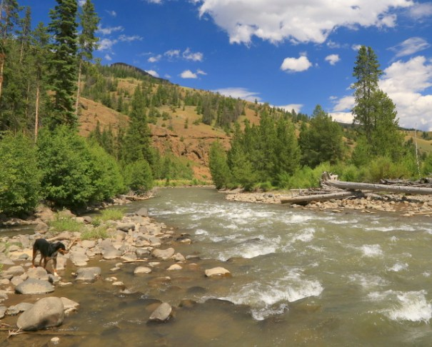 This is where Cody and I stopped along the Shoshone River for lunch as we drove the Buffalo Bill Scenic Byway.