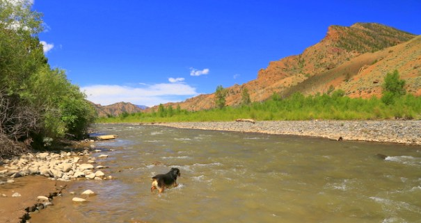 This is the Shoshone River while we are still down the sagebrush country before we enter the Shoshone NF. Even it is very pretty--Cody likes it!