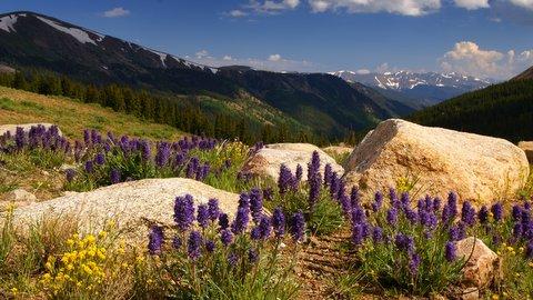 Guenelle Pass, Colorado